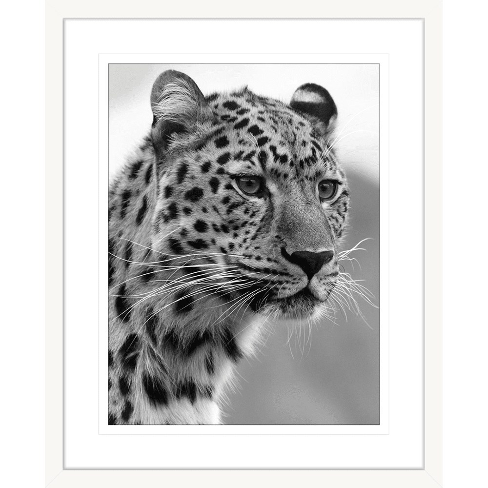 Toto African Animals 02 - Framed Art Print