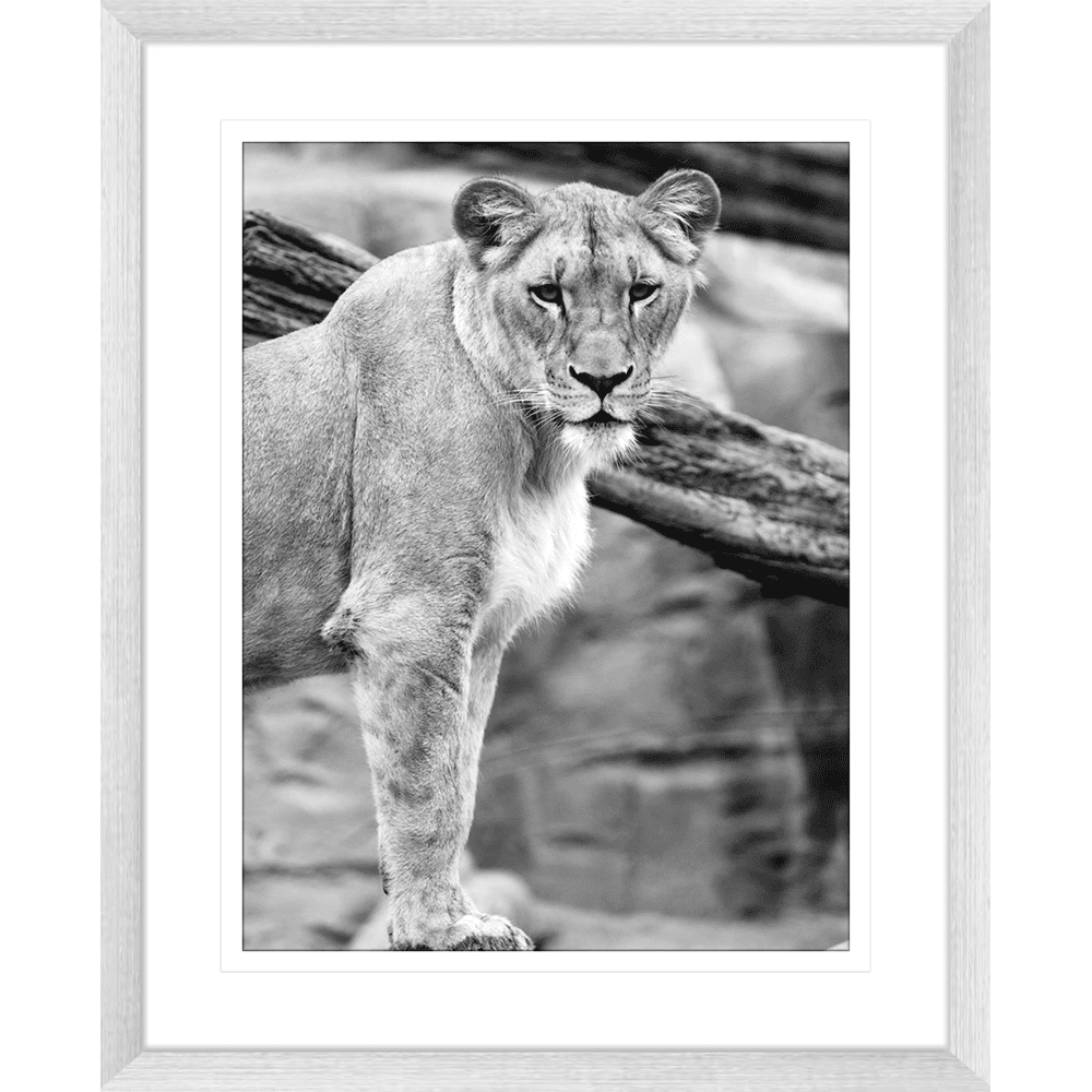 Toto African Animals 11 - Framed Art Print
