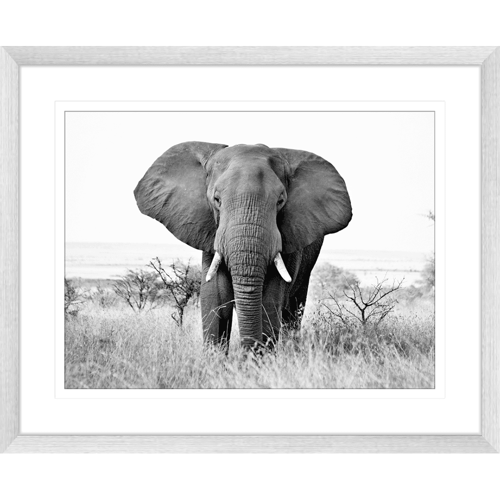 Toto African Animals 14 - Framed Art Print