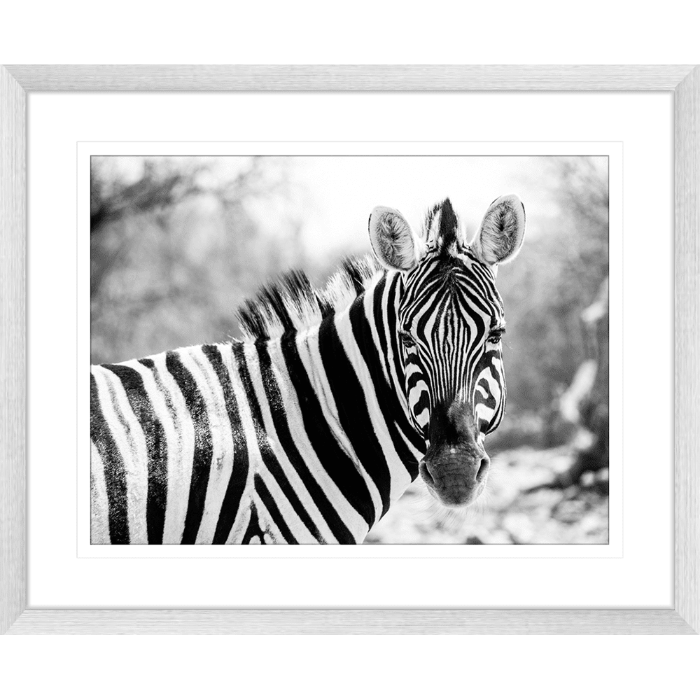 Toto African Animals 15 - Framed Art Print