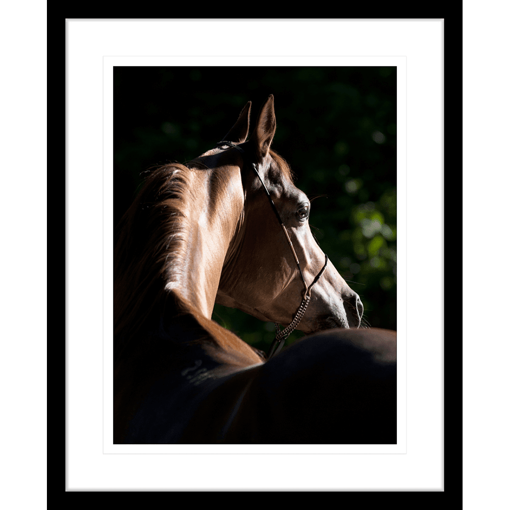 Austin Horses | Framed Art | Wall Art Gold Coast | Wallpaper | Innovate Interiors