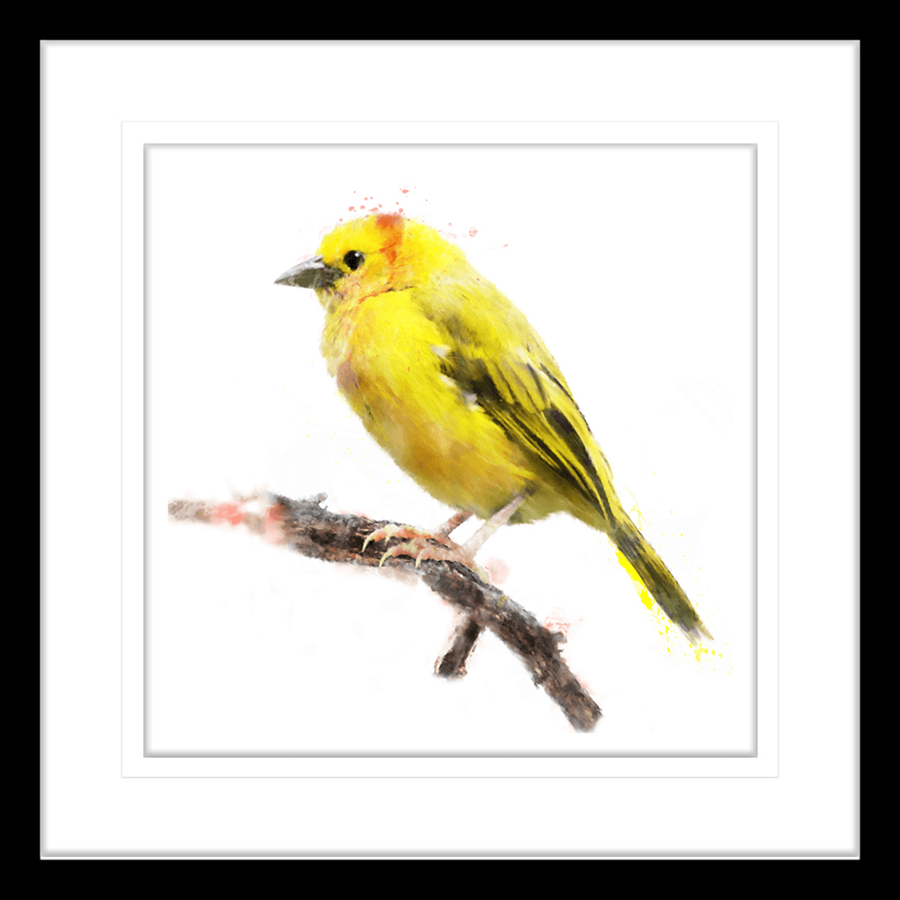 Avairy-Bird-Collection-24-Framed-Art-Print-BIRD24-Black