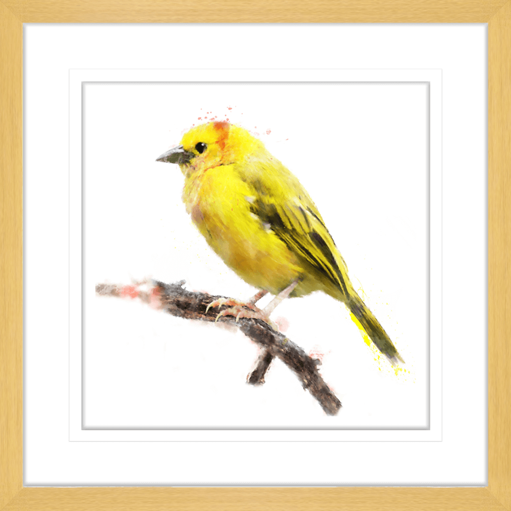 Avairy-Bird-Collection-24-Framed-Art-Print-BIRD24-OAK