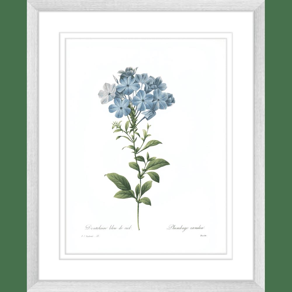Botanicals | Framed Art | Wall Art Gold Coast | Wallpaper | Innovate Interiors