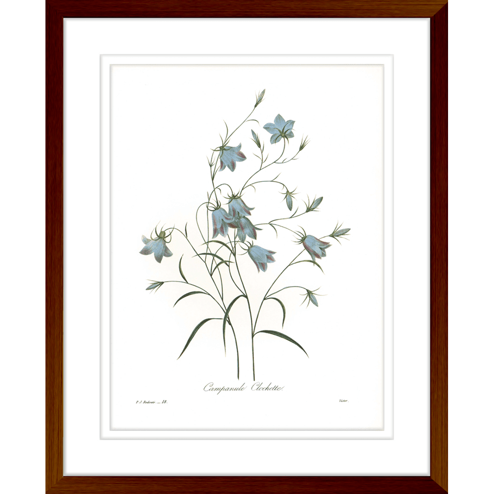Botanicals | Framed Art | Wall Art Gold Coast | Wallpaper | Innovate Interiors
