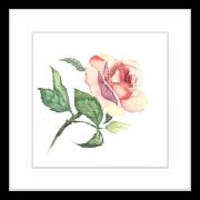 Botanicals-Collection-Framed-Art-Print-WB02-BLK
