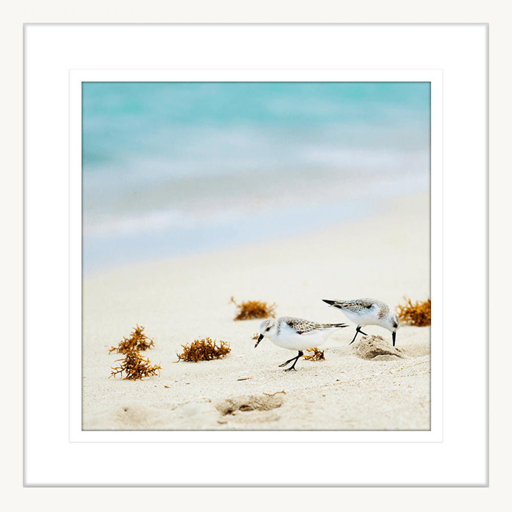 By-the-Seaside-Collection-06-Framed-Art-Print-BTS06-Wht
