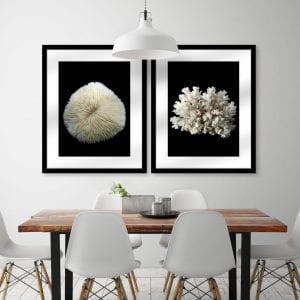 Corals & Shells