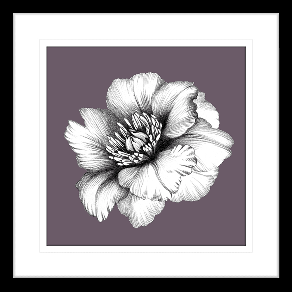 In Bloom | Framed Art | Wall Art Gold Coast | Wallpaper | Innovate Interiors