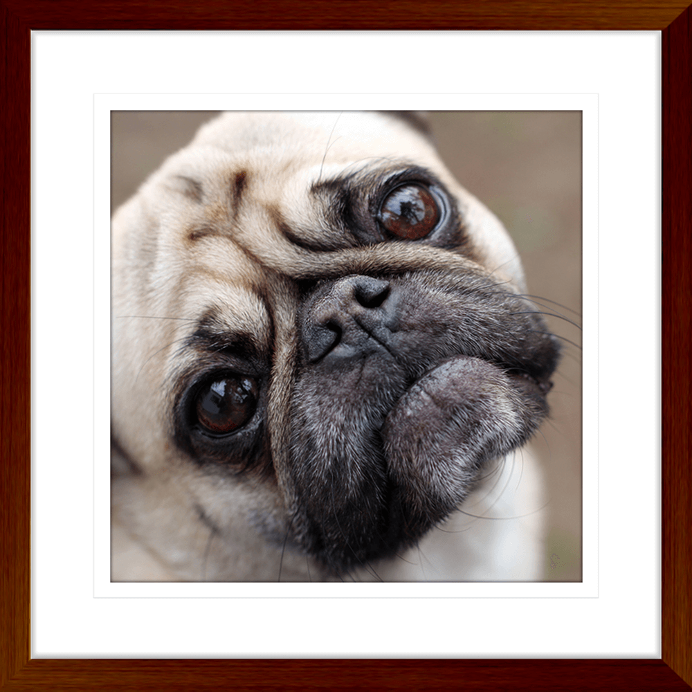 Oscar & Herbert Collection - OSC01 - Framed Art Print Teak
