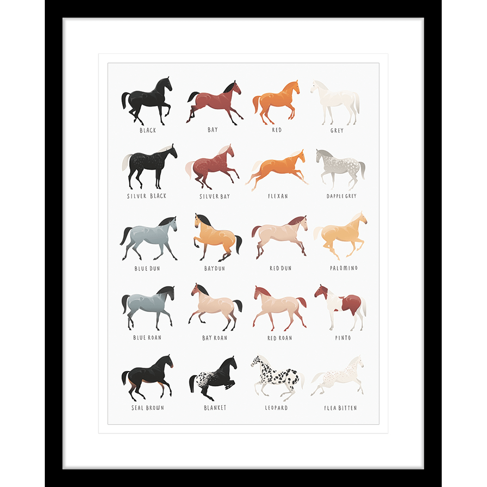 Equine Posters | Framed Art | Wall Art Gold Coast | Wallpaper | Innovate Interiors
