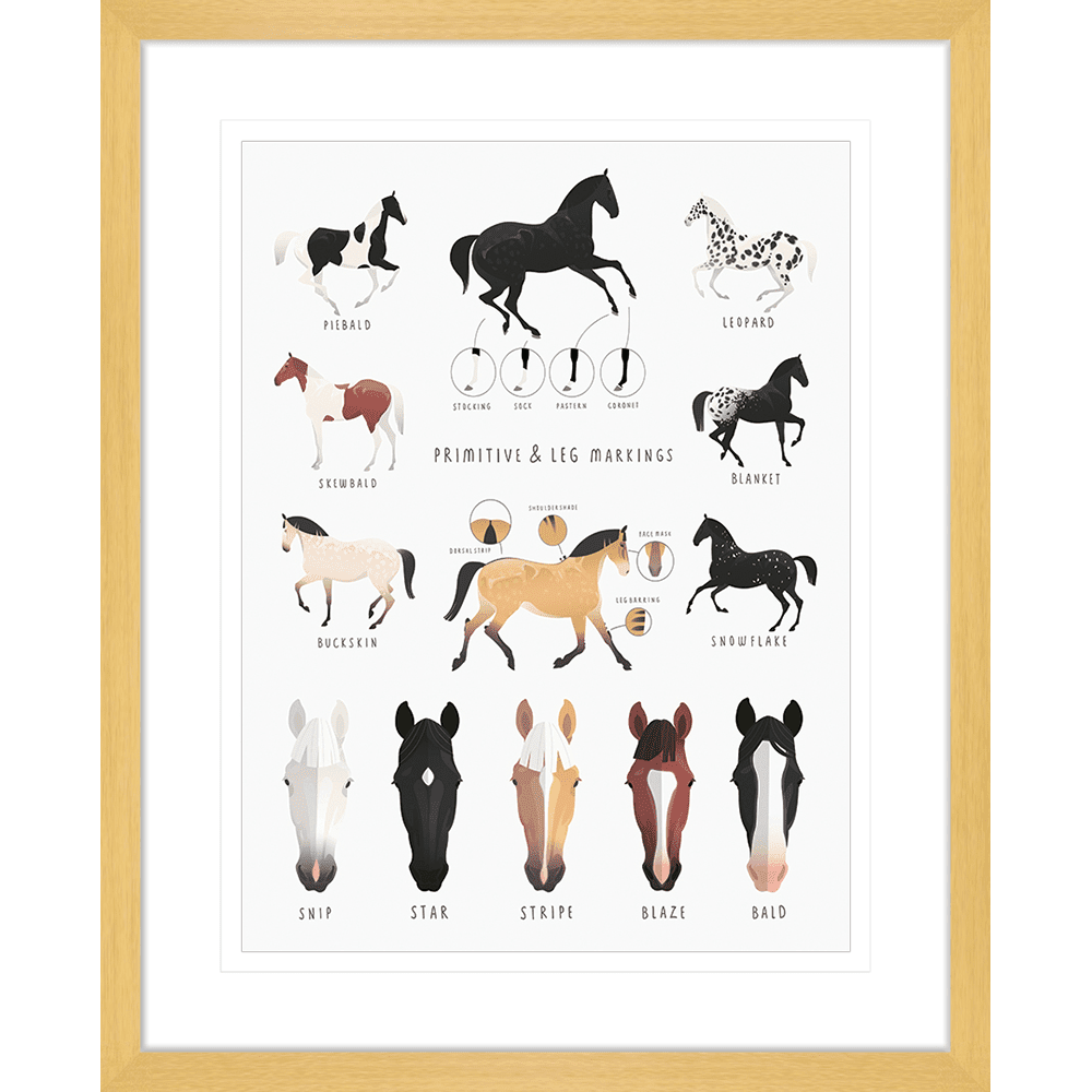 Everything Equine Collection #02 - Framed Art Print - EQ02 Oak