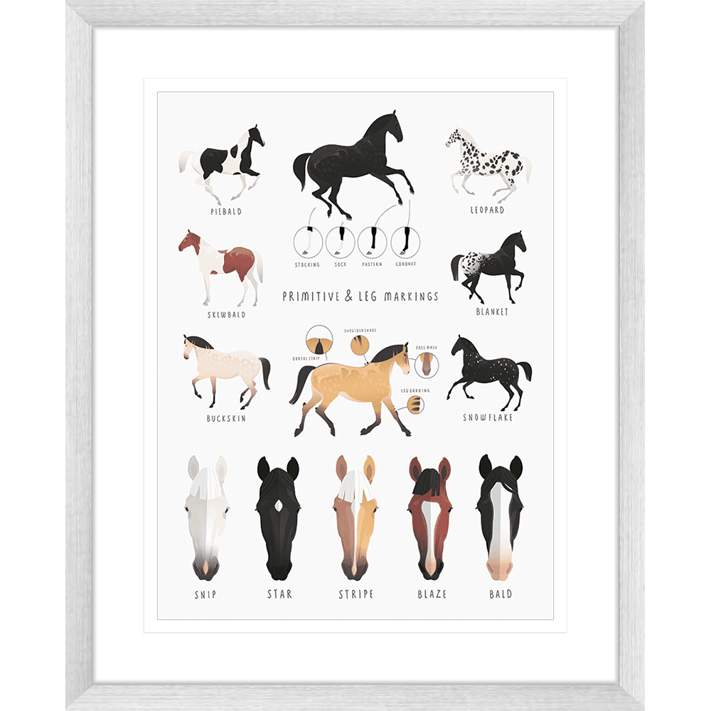 Everything Equine Collection #02 - Framed Art Print - EQ02 Sil
