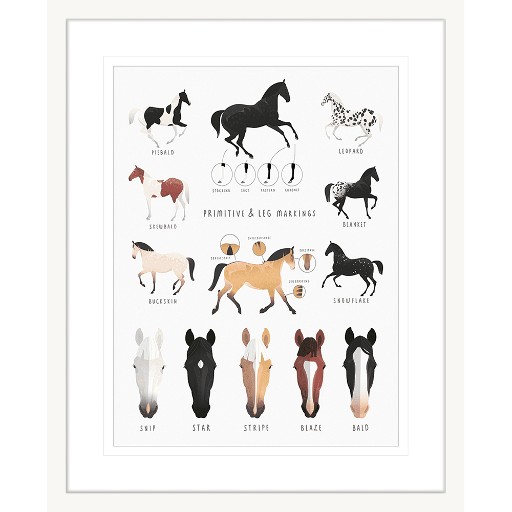 Everything Equine Collection #02 - Framed Art Print - EQ02 Wht