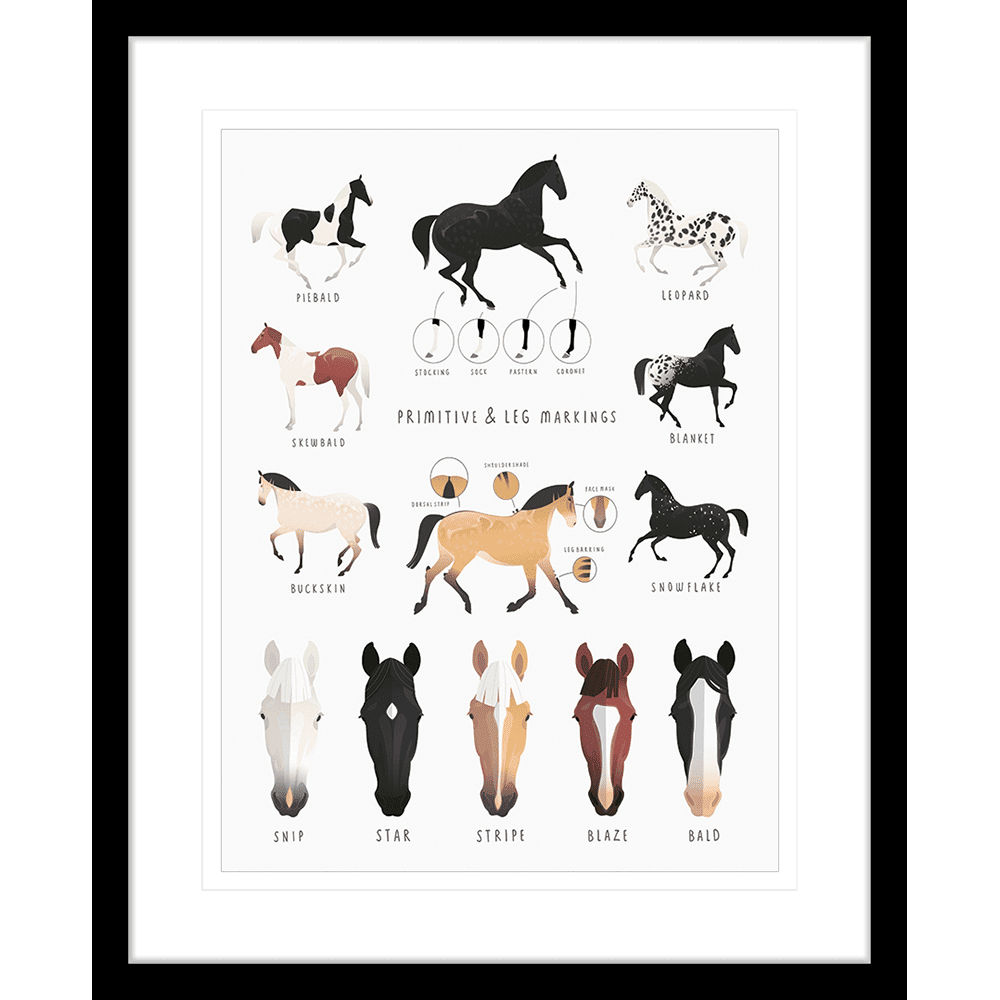 Everything Equine Collection #02 - Framed Art Print - EQ02 bLK