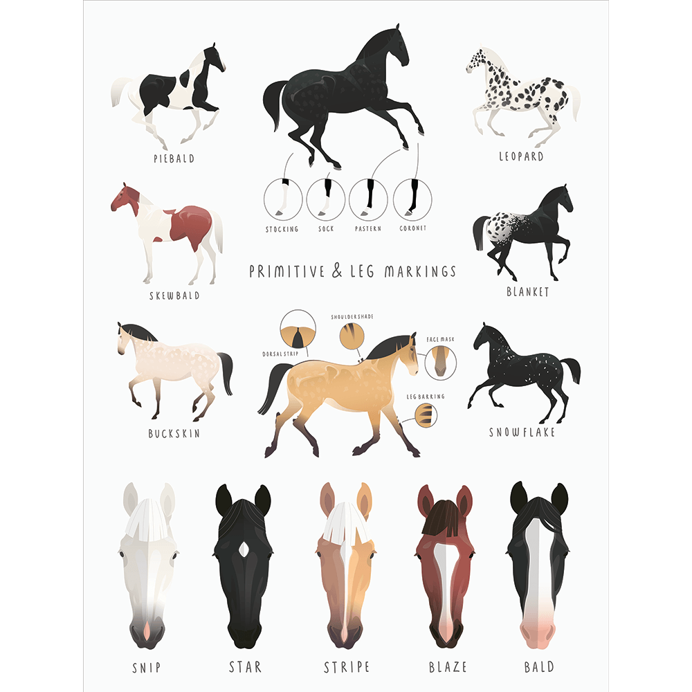 Everything Equine Collection #02 - Stretched Canvas & Paper Print - EQ02