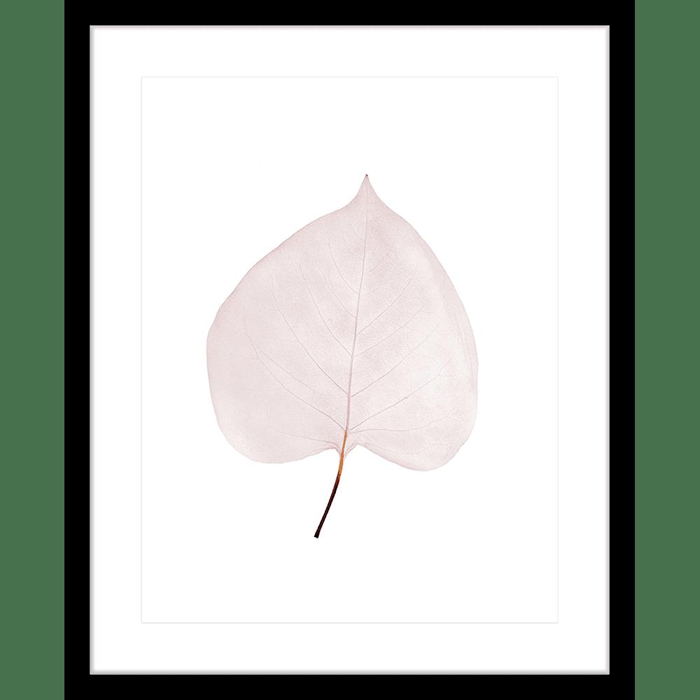 Fragile Leaves | Framed Art | Wall Art Gold Coast | Wallpaper | Innovate Interiors
