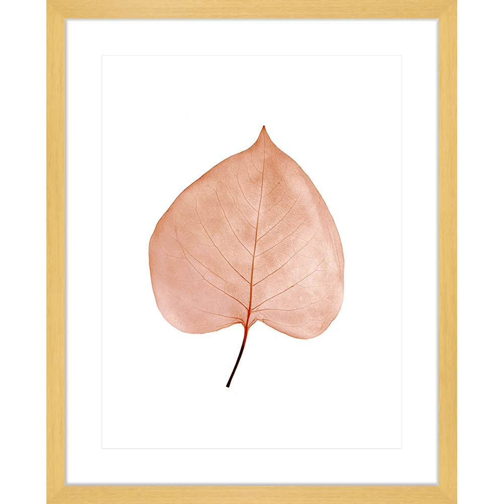 Fragile Leaves | Framed Art | Wall Art Gold Coast | Wallpaper | Innovate Interiors