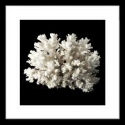 Reef Coral   Framed Art   Wall Art Gold Coast   Wallpaper   Innovate Interiors