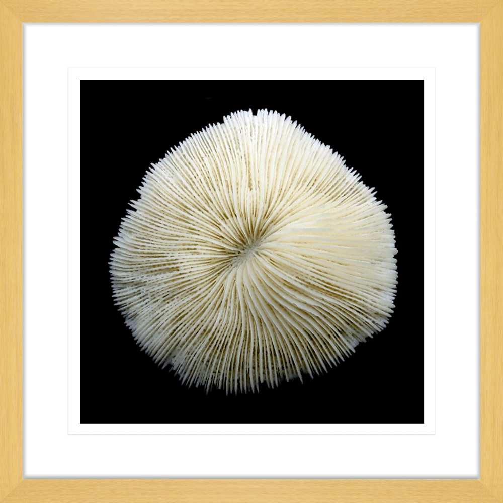 Reef Coral | Framed Art | Wall Art Gold Coast | Wallpaper | Innovate Interiors