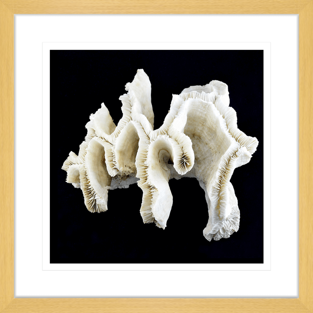 Reef Coral | Framed Art | Wall Art Gold Coast | Wallpaper | Innovate Interiors