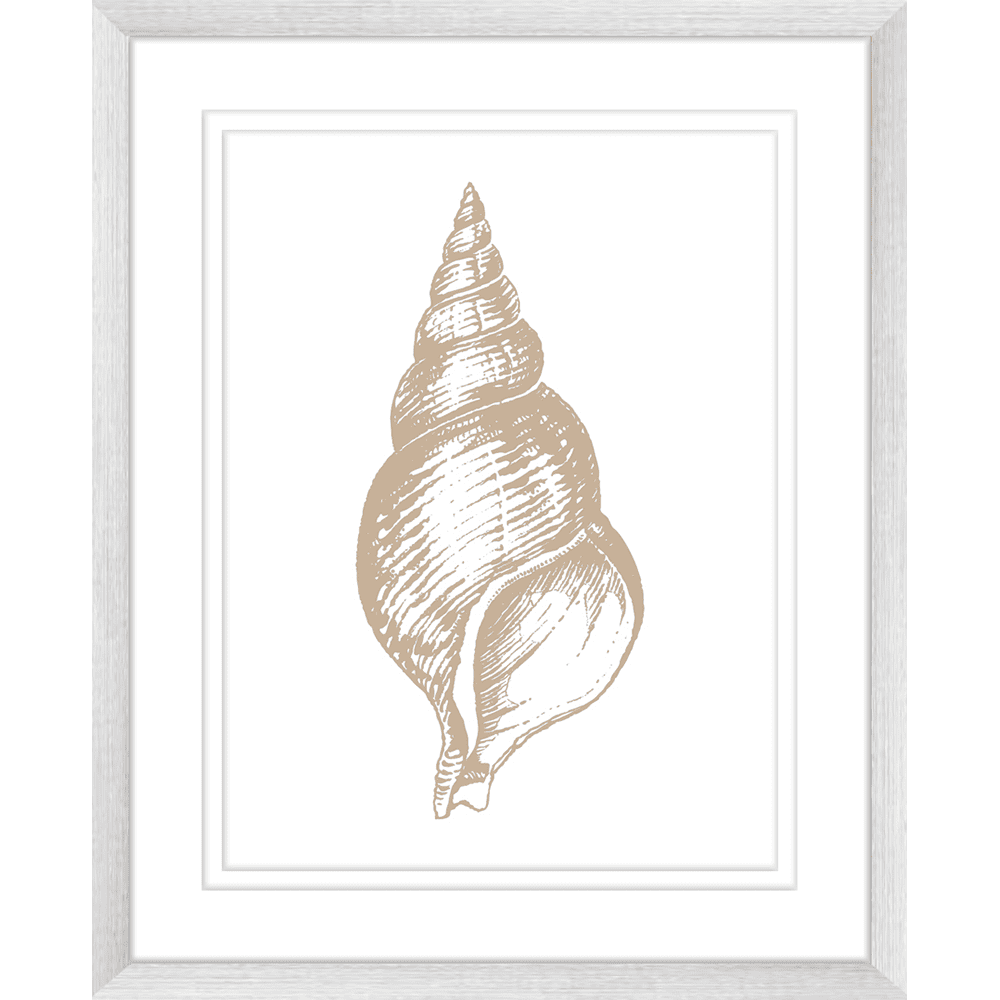 Stunning Shells | Framed Art | Wall Art Gold Coast | Wallpaper | Innovate Interiors