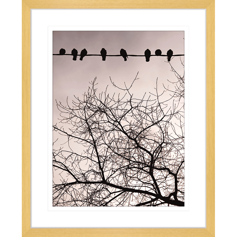 Swallows Song | Framed Art | Wall Art Gold Coast | Wallpaper | Innovate Interiors