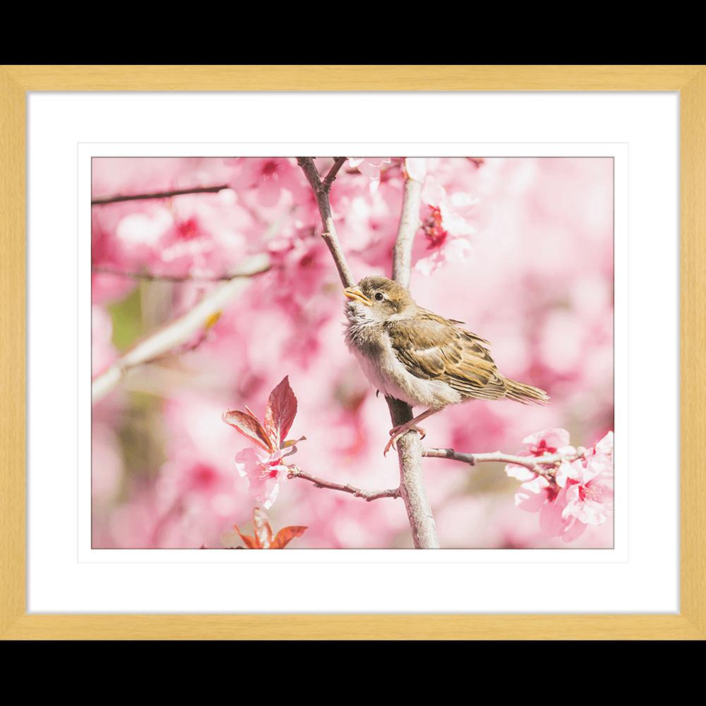Swallows Song | Framed Art | Wall Art Gold Coast | Wallpaper | Innovate Interiors