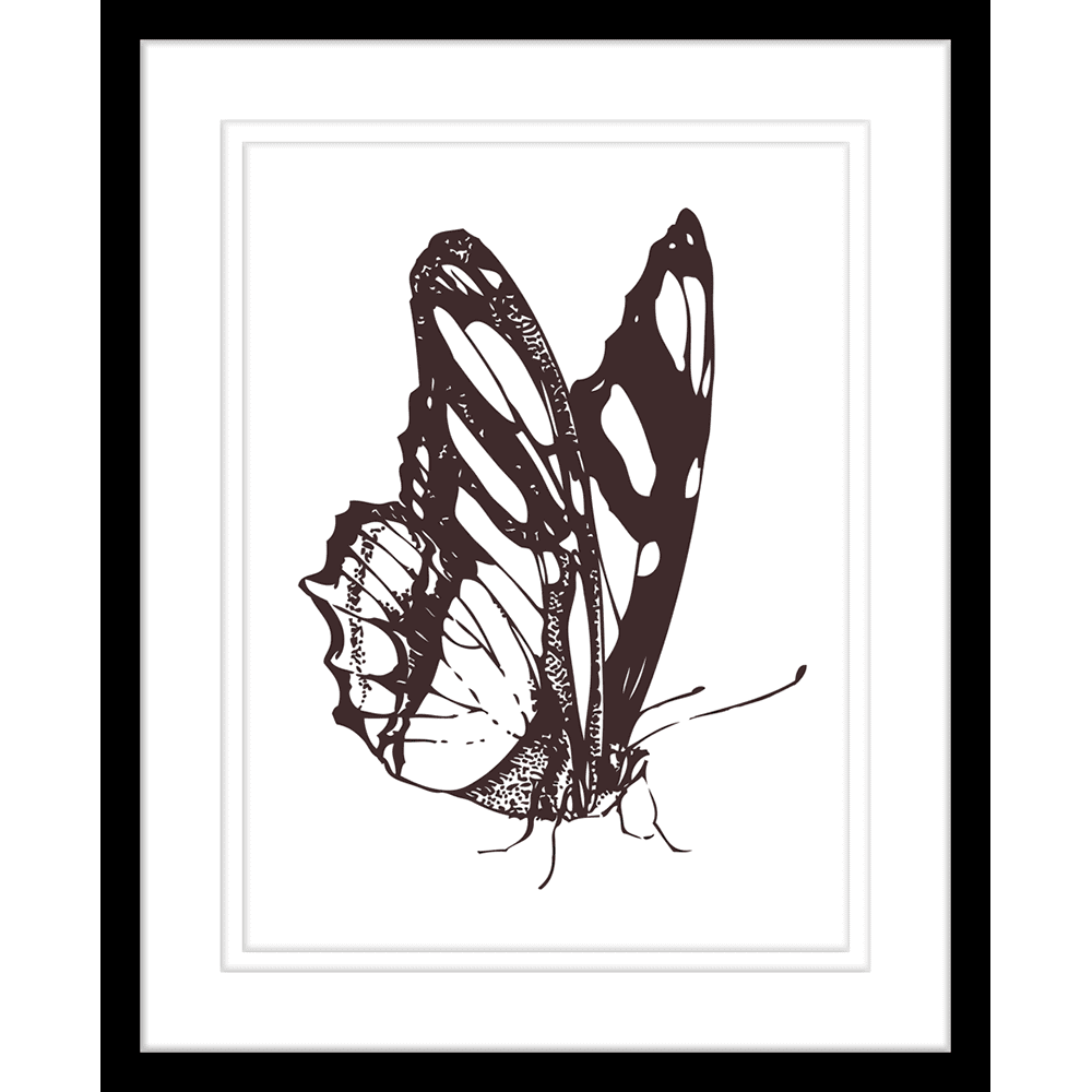 db3b0f1a1976b Beautiful Butterflies | Framed Art | Wall Art Gold Coast | Wallpaper |  Innovate Interiors