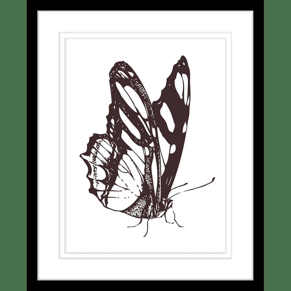 Beautiful Butterflies | Framed Art | Wall Art Gold Coast | Wallpaper | Innovate Interiors