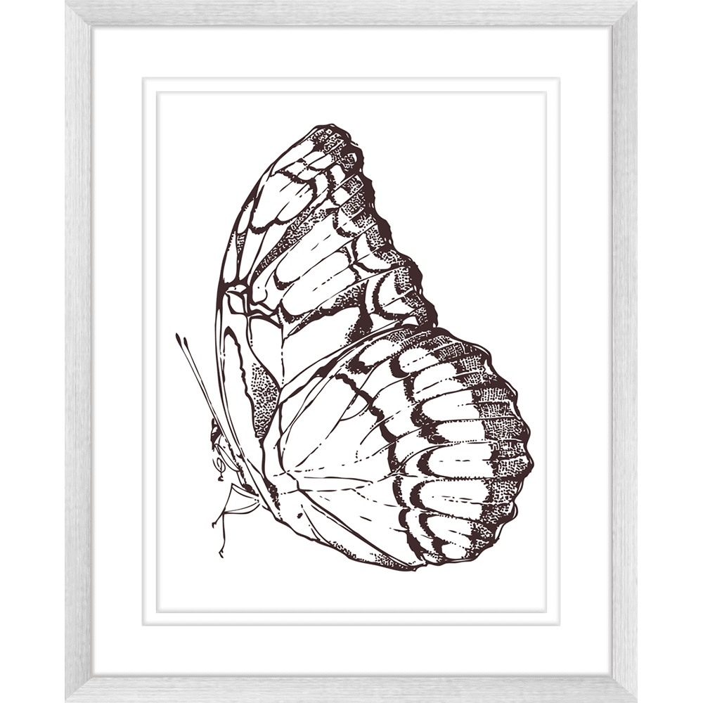Beautiful Butterflies | Framed Art | Wall Art Gold Coast | Wallpaper | Innovate Interiors