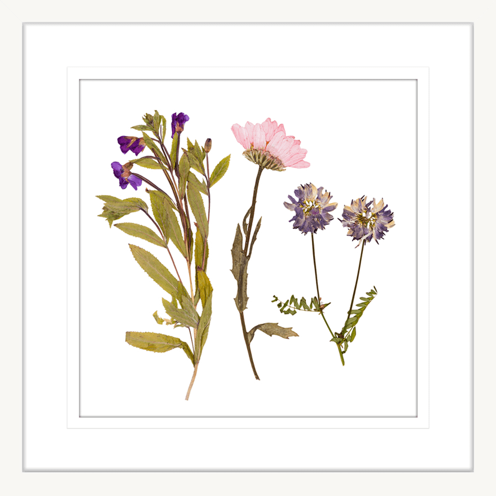 Spring Wildflowers | Framed Art | Wall Art Gold Coast | Wallpaper | Innovate Interiors