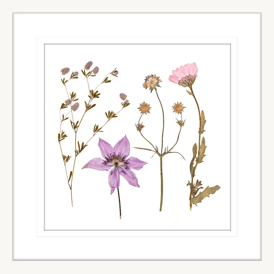 Spring Wildflowers | Framed Art | Wall Art Gold Coast | Wallpaper | Innovate Interiors
