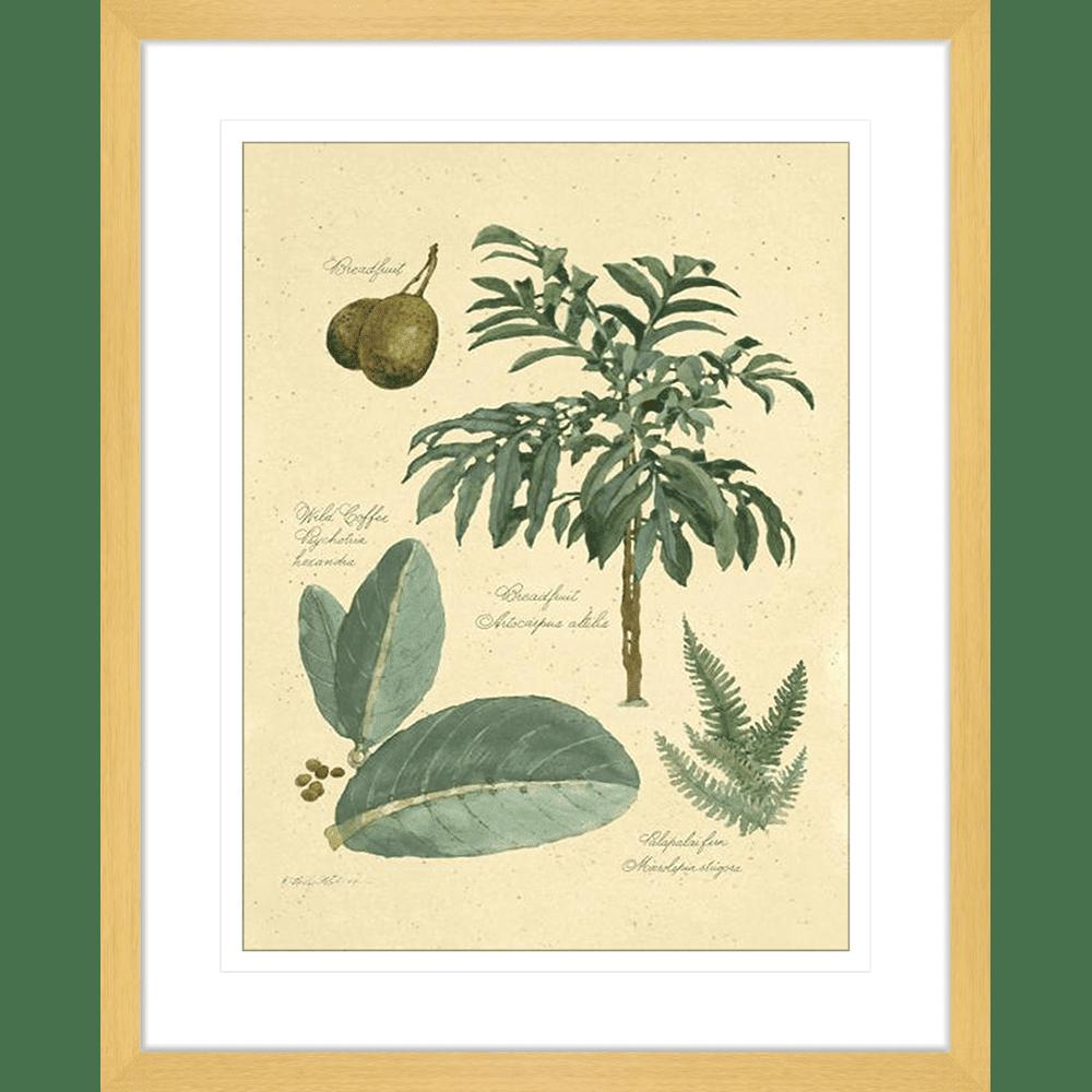 Botanical Plant Specimens | Framed Art | Wall Art Gold Coast | Wallpaper | Innovate Interiors