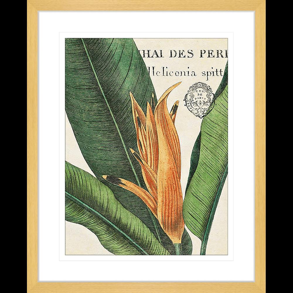 Botanical Study | Framed Art | Wall Art Gold Coast | Wallpaper | Innovate Interiors