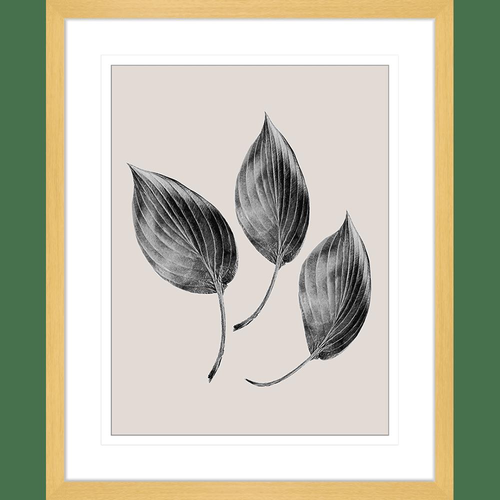 Aspen Leaves | Framed Art | Wall Art Gold Coast | Wallpaper | Innovate Interiors
