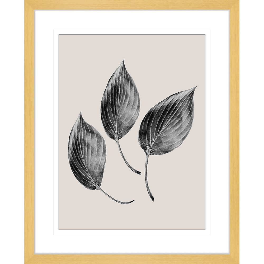 Aspen Leaves | Framed Art | Wall Art Gold Coast | Wallpaper | Innovate Interiors