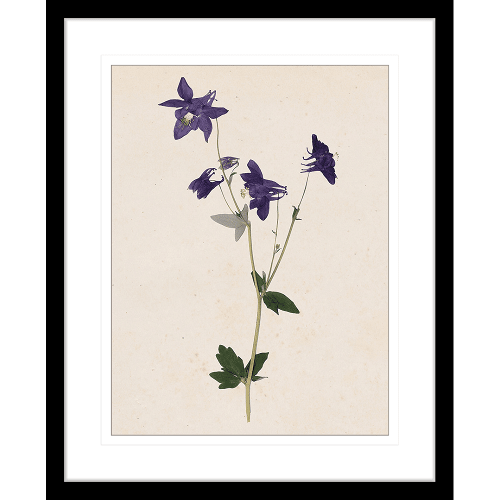 Les Fleurs Collection - FLEU01 - Framed Art Print Black