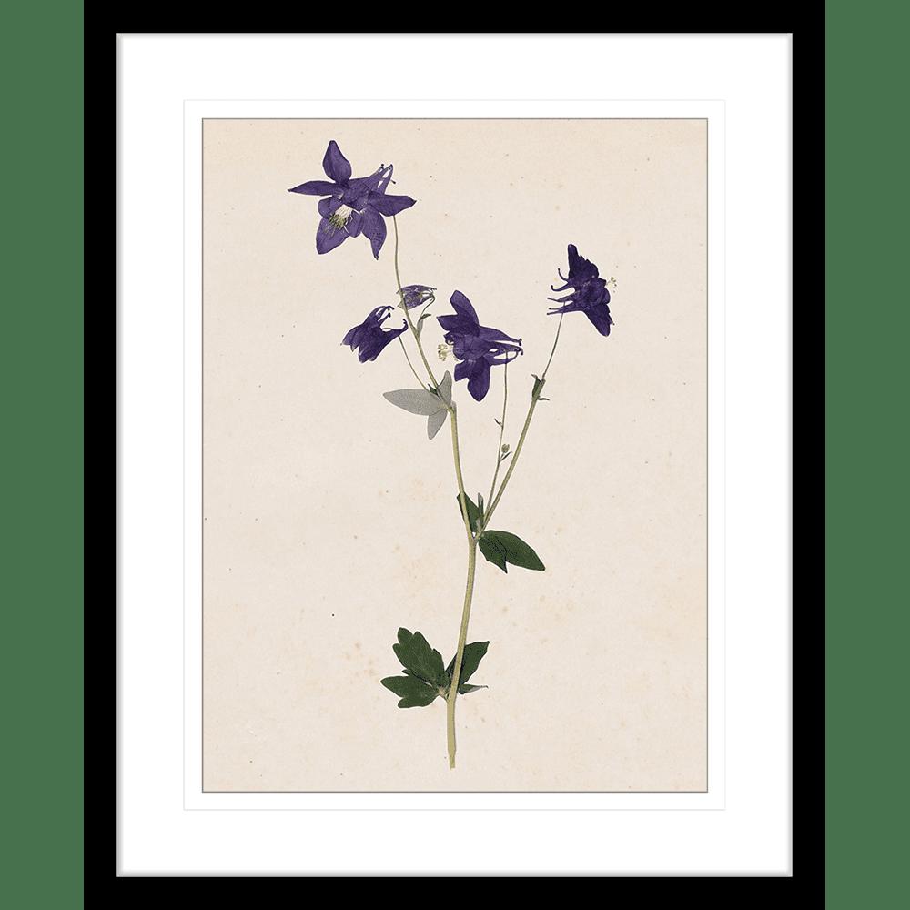 Les Fleurs Collection - FLEU01 - Framed Art Print Black