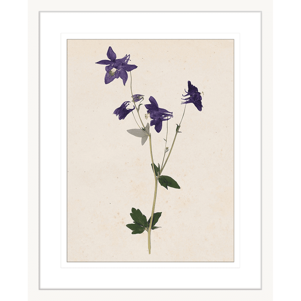 Les Fleurs Collection - FLEU01 - Framed Art Print White