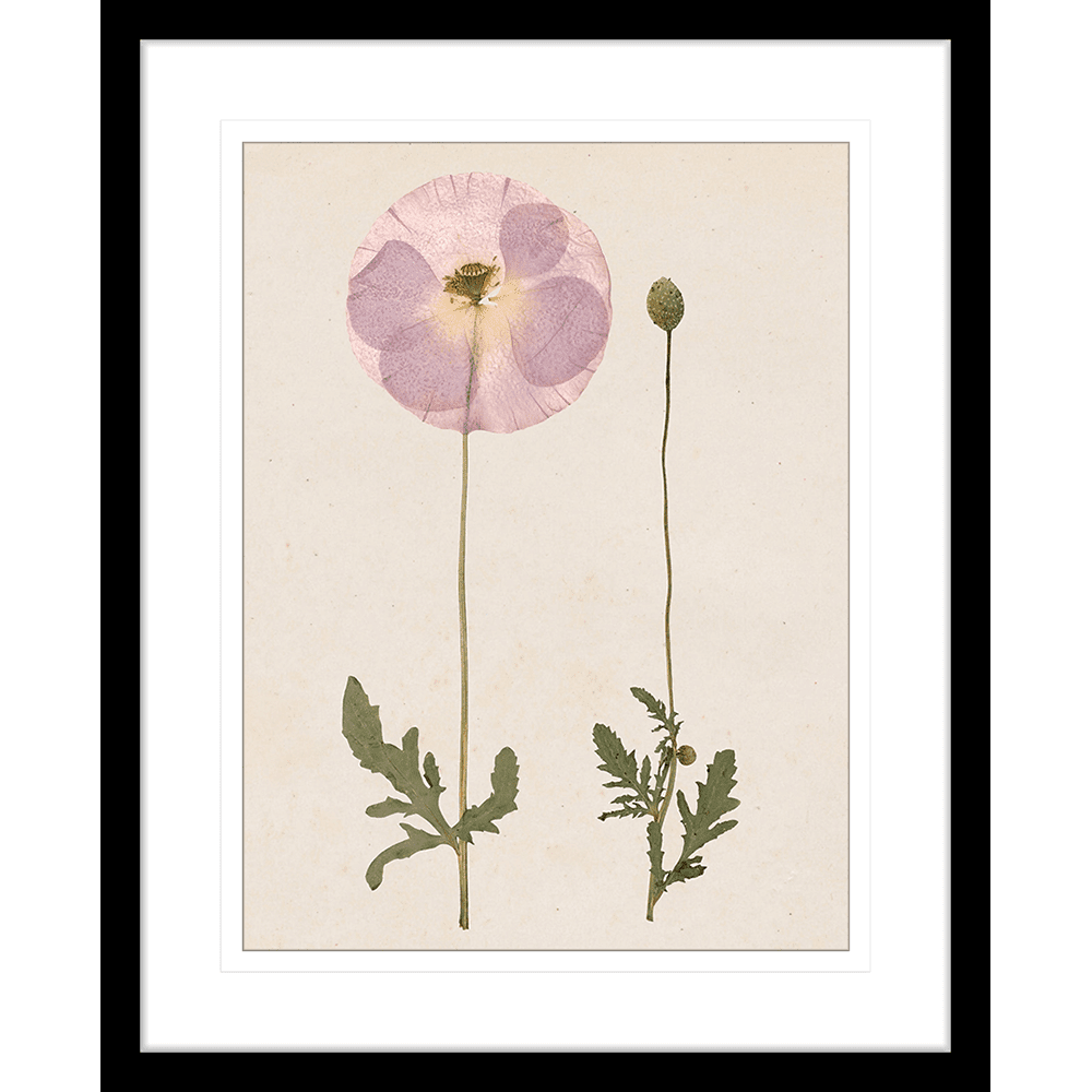 Les Fleurs | Framed Art | Wall Art Gold Coast | Wallpaper | Innovate Interiors