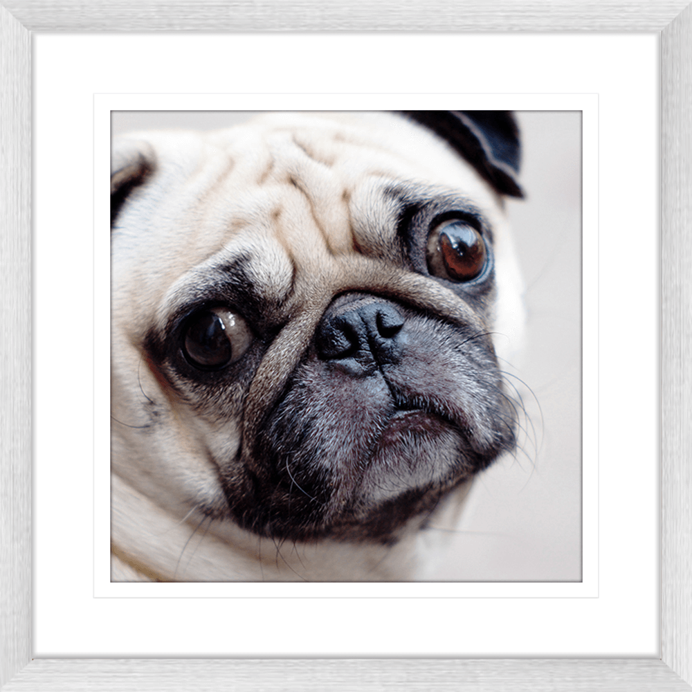 Oscar & Herbert Collection - OSC03 - Framed Art Print Silver