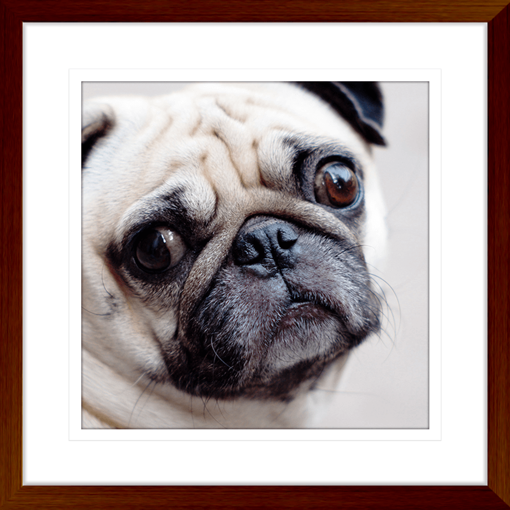 Oscar & Herbert Collection - OSC03 - Framed Art Print Teak