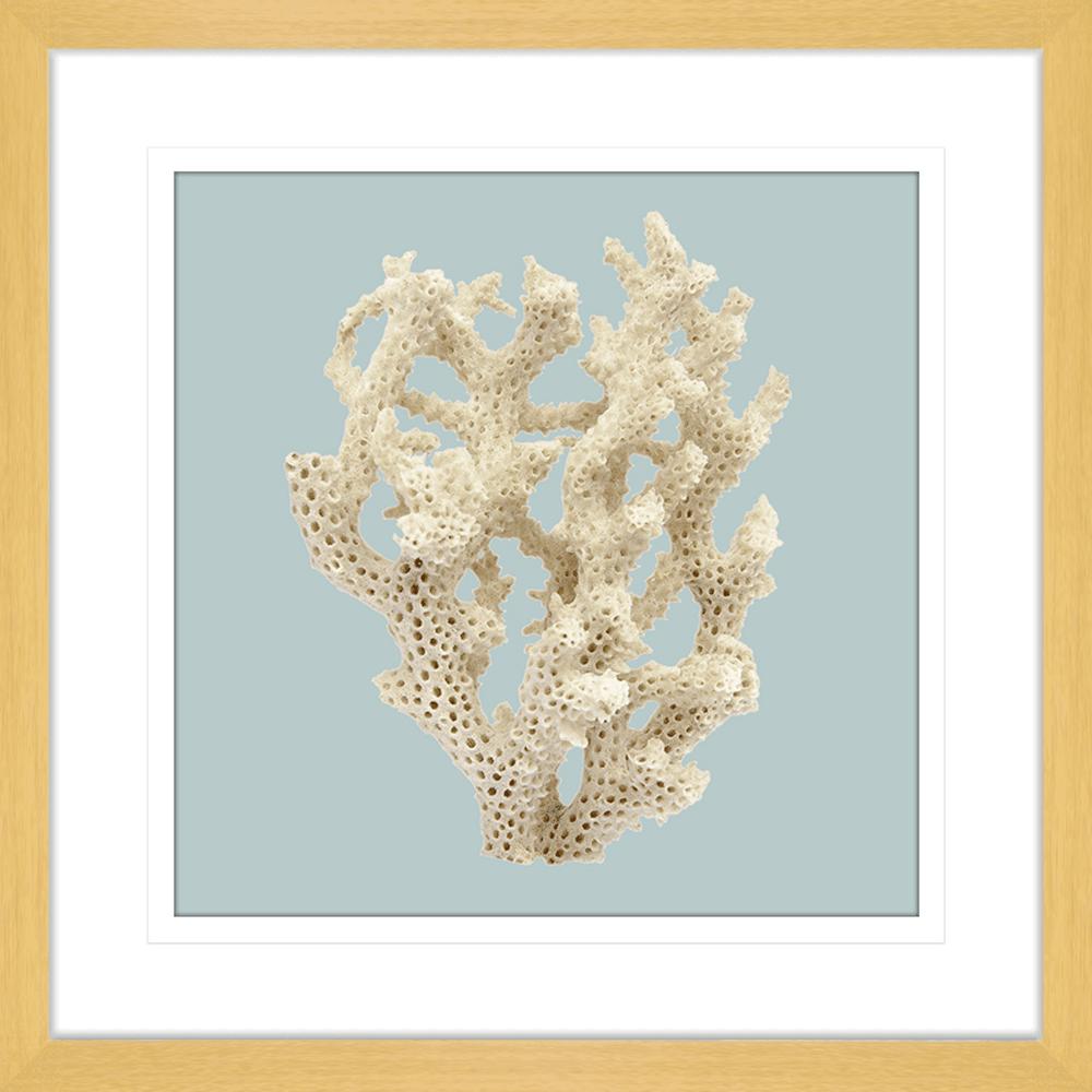 Reef Coral Collection - COR06SB Blue - Framed Art Print Oak