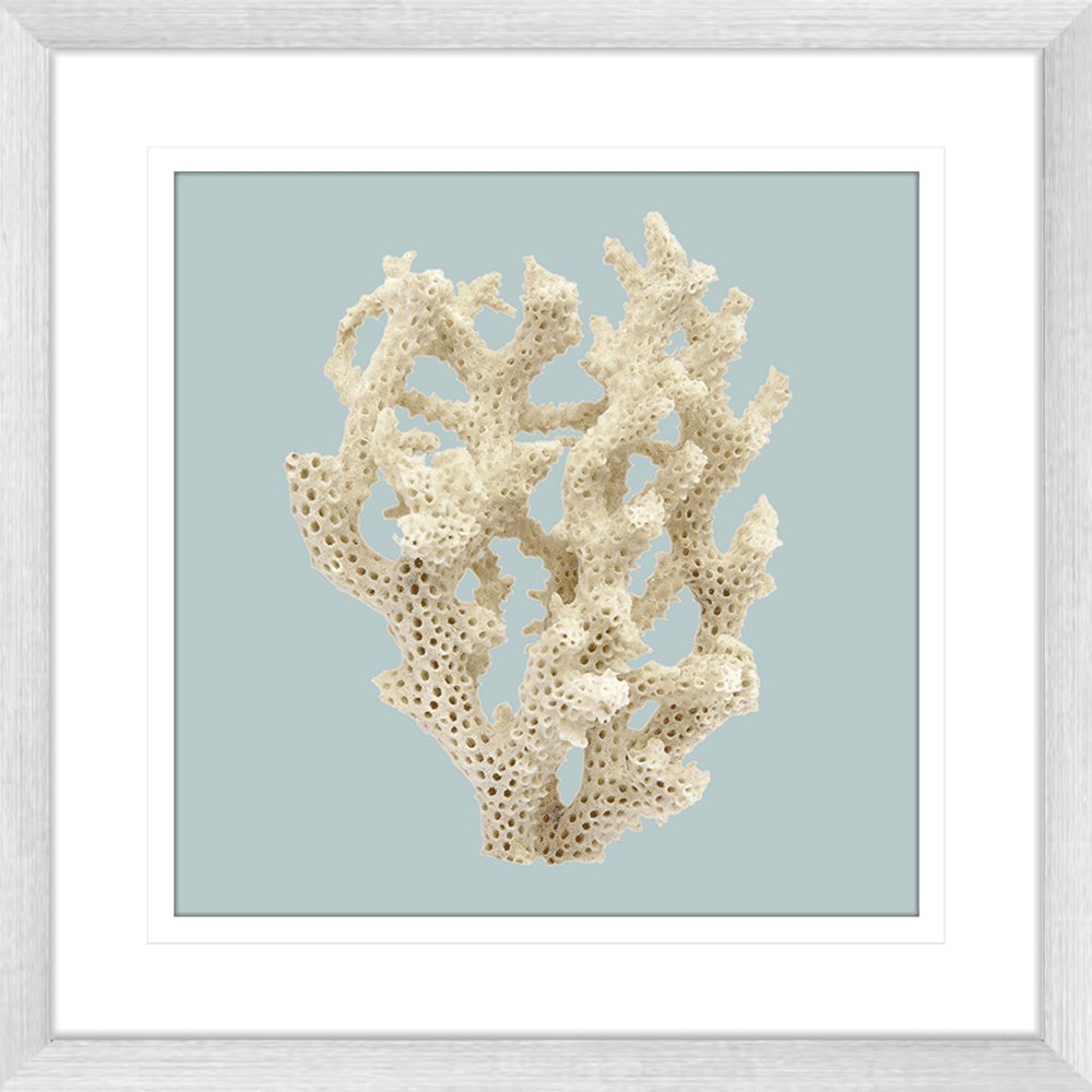 Reef Coral Collection - COR06SB Blue - Framed Art Print Sil