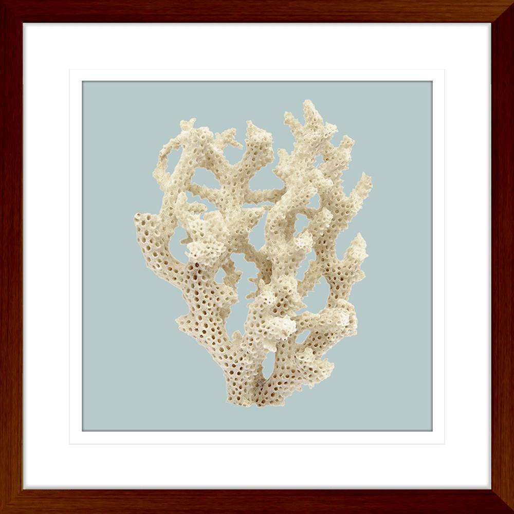Reef Coral Collection - COR06SB Blue - Framed Art Print Teak