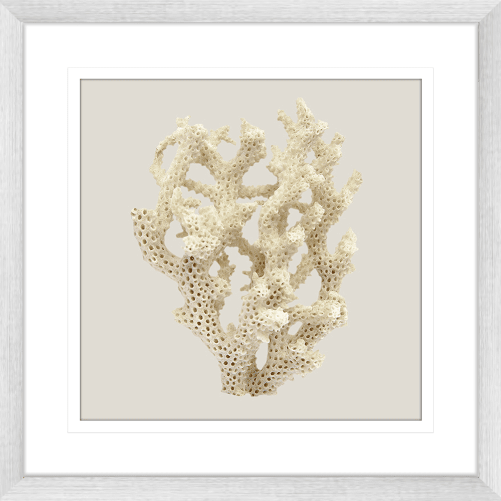 Reef Coral Collection - COR06ST Taupe - Framed Art Print Sil