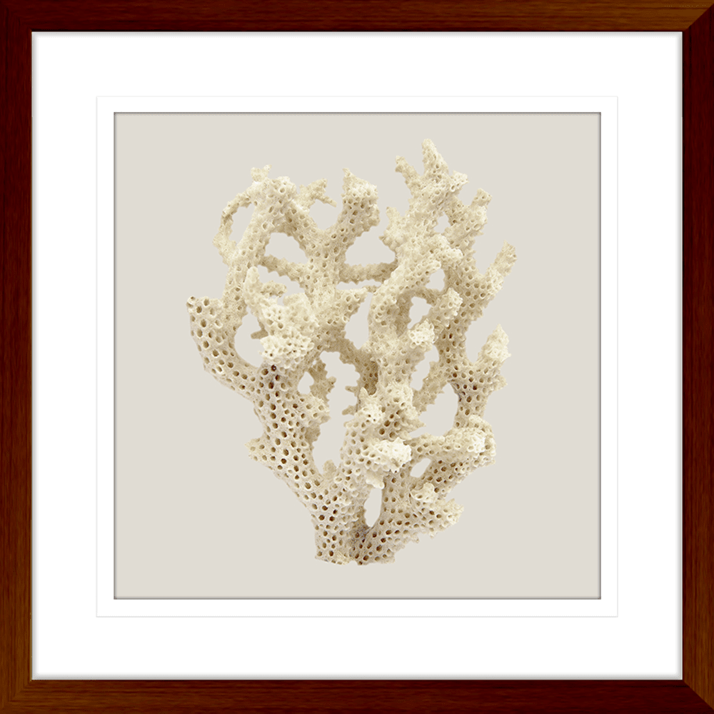 Reef Coral Collection - COR06ST Taupe - Framed Art Print Teak