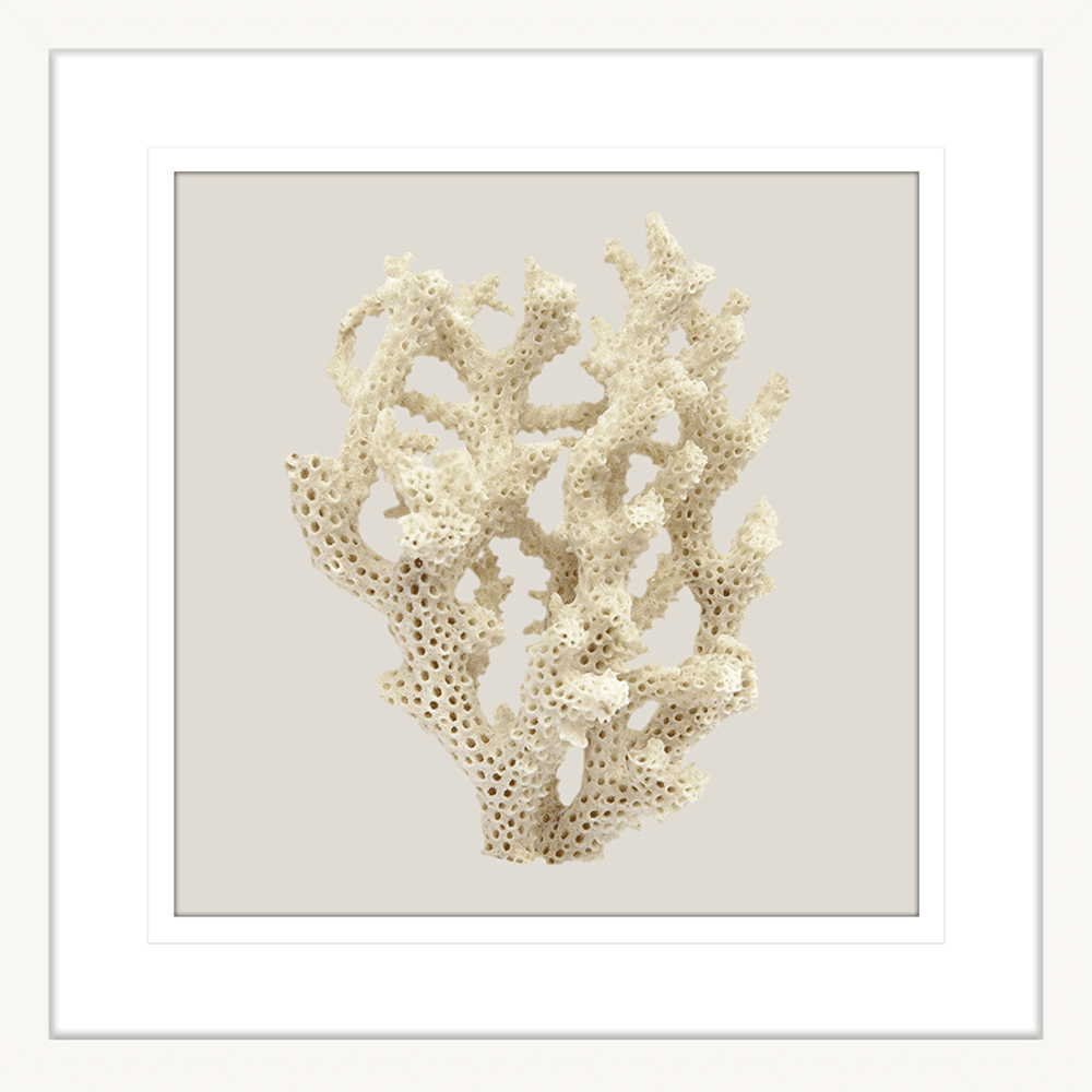 Reef Coral Collection - COR06ST Taupe - Framed Art Print Wht