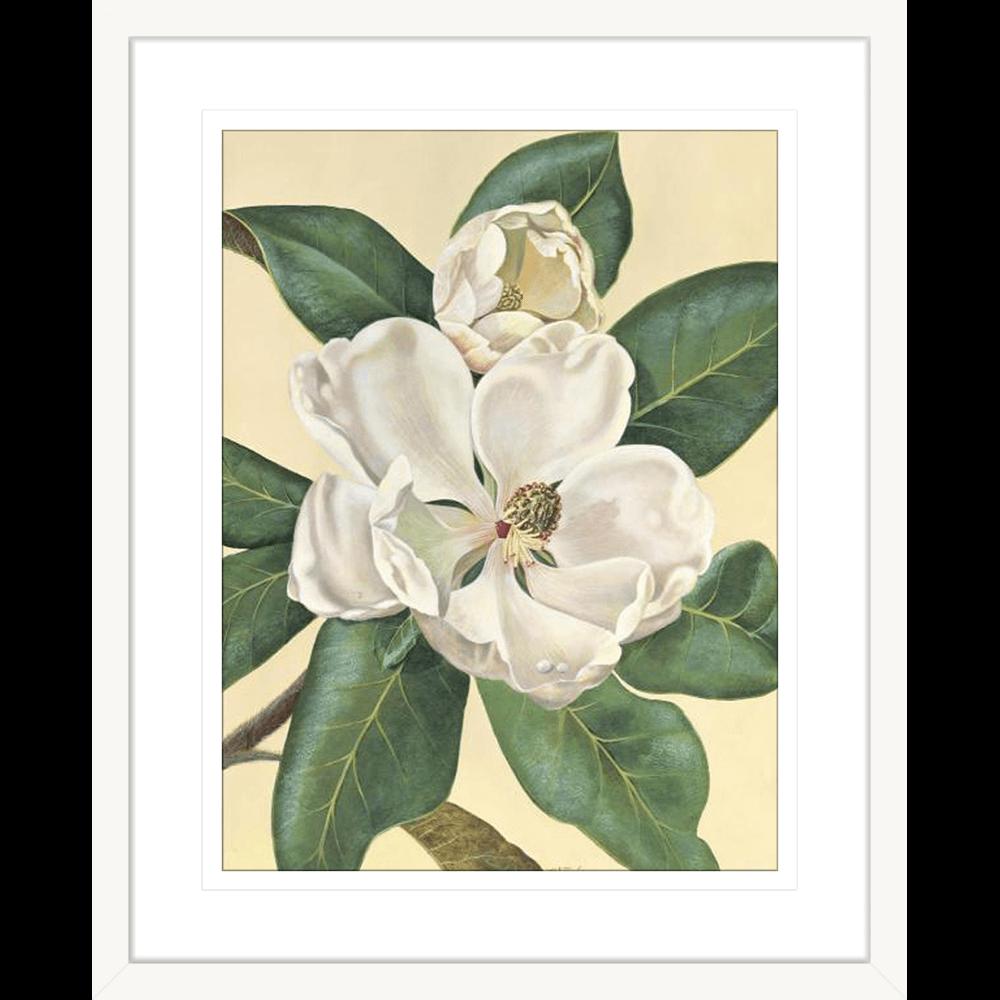 'Morning Magnolia' Grandiflora | Framed Art | Wall Art Gold Coast | Wallpaper | Innovate Interiors